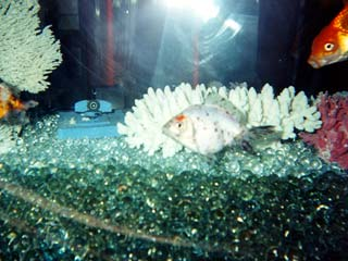 The real truth behind mtv 39 s the real world hudson street for Fish tank camera